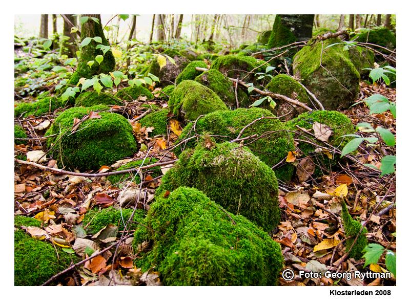 Mossiga stenar - Klosterleden