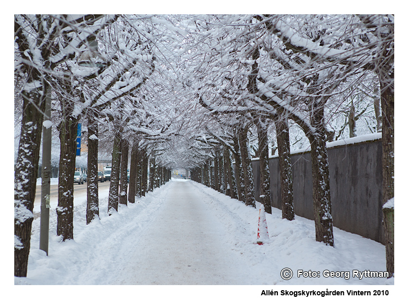 Allén - Skogskyrkogården