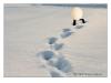Ägg i snön